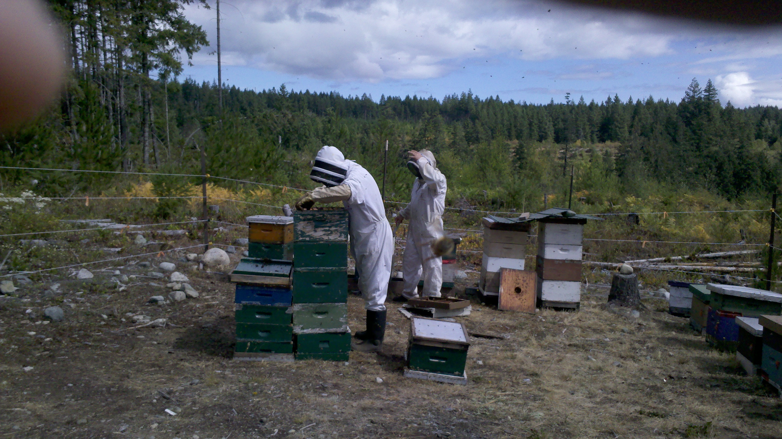Checking colonies in the fall