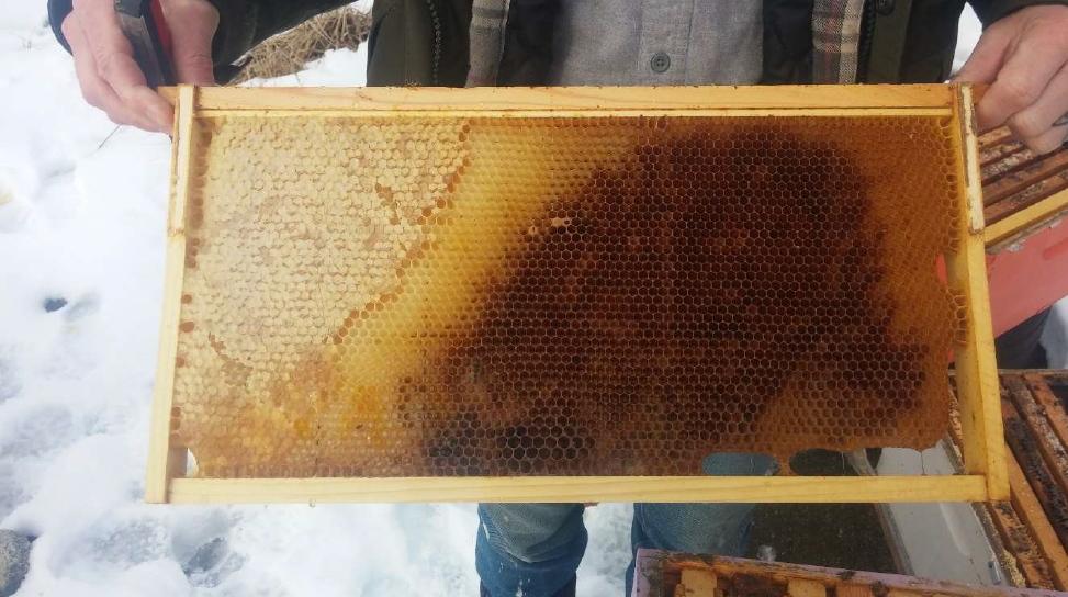 Why did my Honey Bees die?