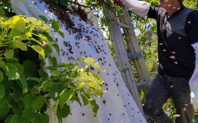 Swarm Catching