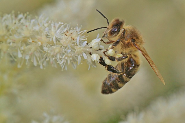 The Buzz Around Registering Your Bees – New Registration System
